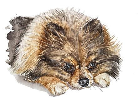 aquarela cachorro