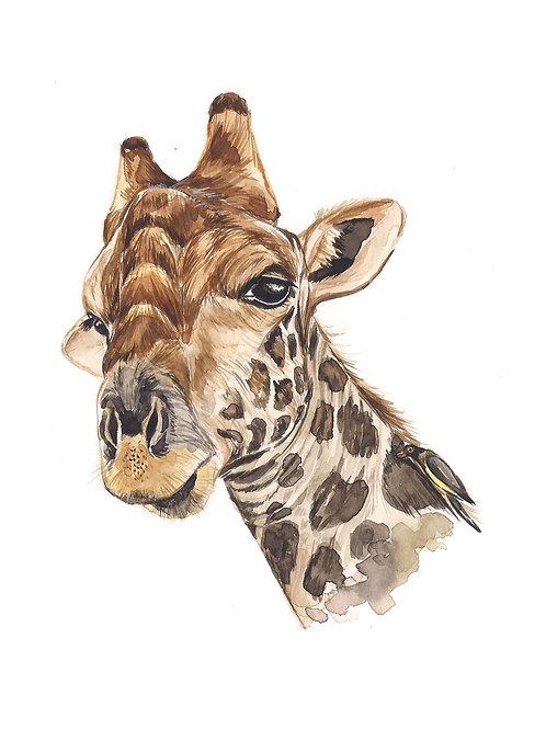 Giraffe Watercolor 15x20cm