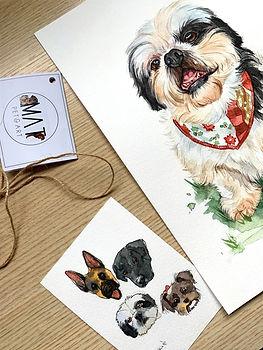 pintura pet