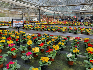 Spring Bedding Out Now!