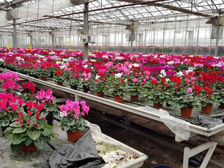 Fantastic Prices on Winter Plants!