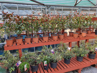 Huge range of shrub, herbaceous and specimen plants out now!