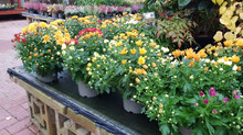 Great range of winter plants!
