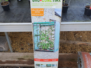 Grow your own tomatoes!