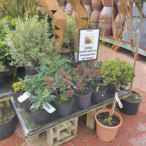 Great offers to get going with planting!