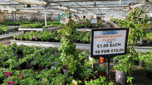 Summer Bedding and Basket Plants Out Now!