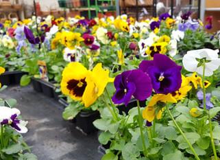 Get some gardening support!
