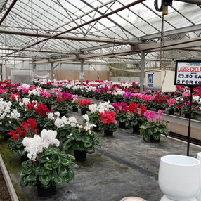 Blooming Greenhouses!