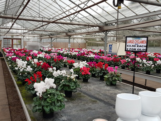 Blooming Greenhouses!