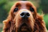 Dog-dogs-35247719-3706-2480.jpg