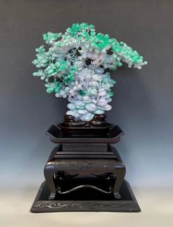 Jadeite Fruit Tree