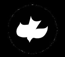 White Dove 2018.png
