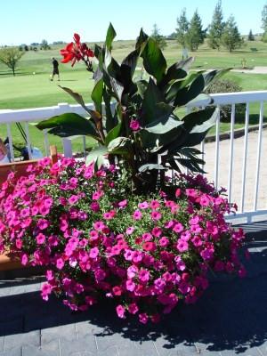 Helpful Container Gardening Tips