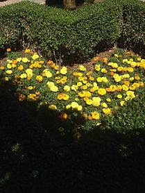 caroadopts yellow flower heart.jpg