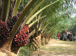 Concerned-about-palm-oil-sustainability