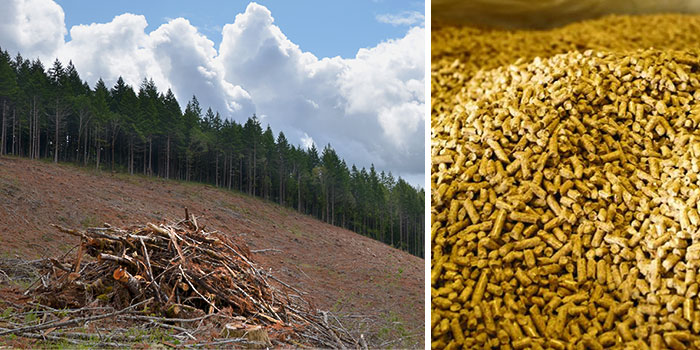 blog_060413_biomass_pellets.jpg
