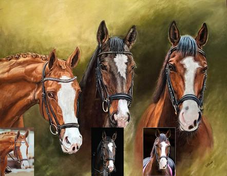 Portrait of three horse heads