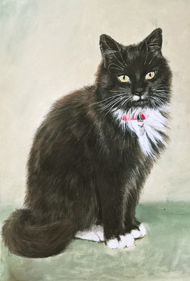 Long-haired cat portrait