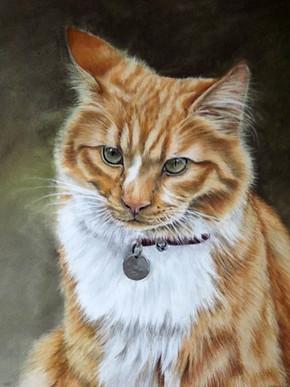 cat portrait long haired ginger