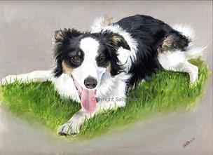 Dog portraits border collie painting