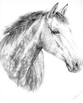Horse portrait grey thoroughbred