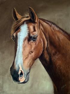chestnut gelding portrait