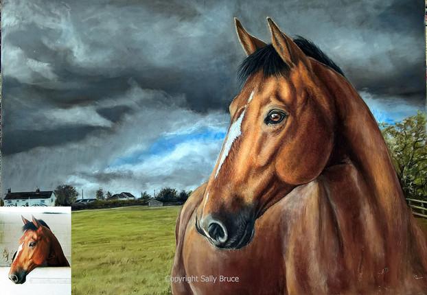 Horse portrait bay warmblood