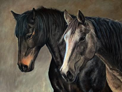 Horse portrait. Two mares