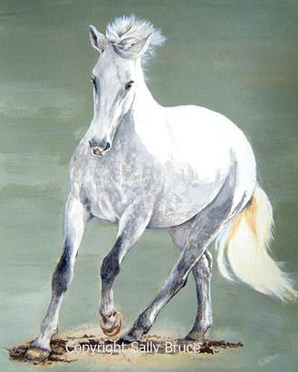 Horse portrait Irish Sport horse