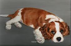 Dog portrait Cavalier King Charles Spaniel puppy