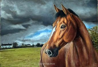Horse portrait Dutch Warmblood