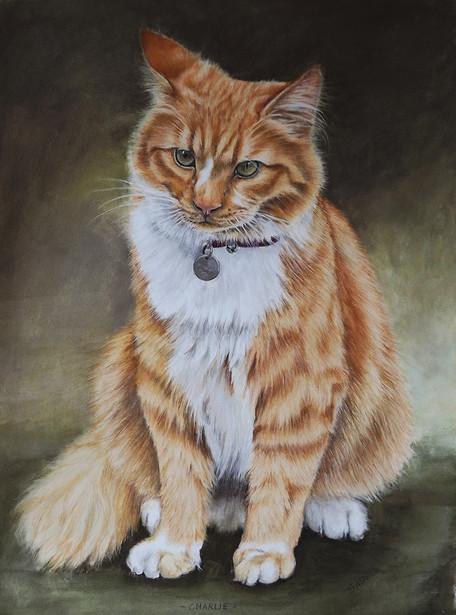 Cat portrait long-haired ginger cat