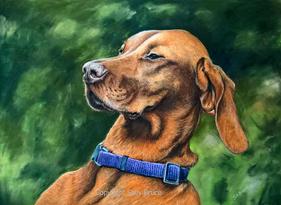 Dog portrait Hungarian vizsla paintings
