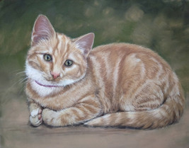 Young ginger cat