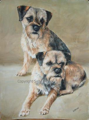Border Terrier portraits paintings