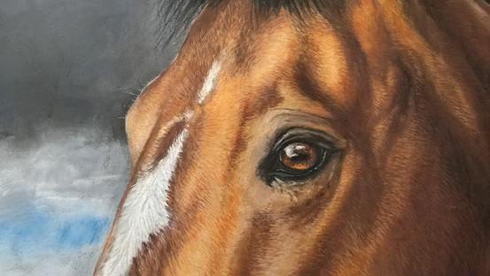 Horse eye Dutch warmblood horse portrait painting pastel
