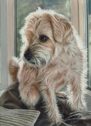 Terrier cross pastel portrait