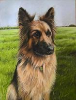 Dog portrait GSD German shepherd