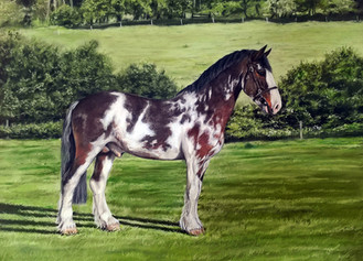 Horse portrait hackney x Irish Draught
