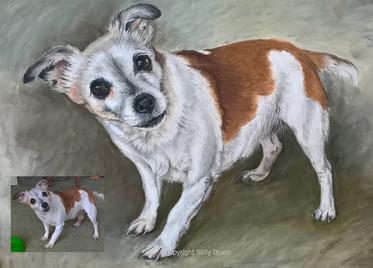 Dog portrait miniature jack russell