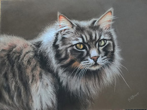Longhaired tabby cat portrait