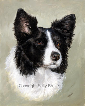 Border Collie portrait dog paintings