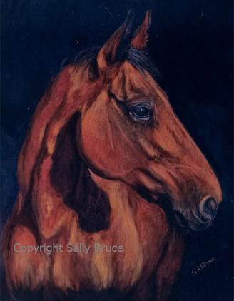 warmblood horse portrait painting pastel