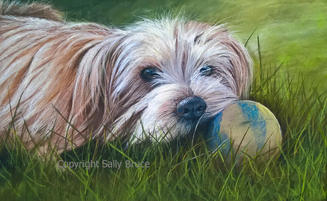 Dog portrait norfolk terrier painting
