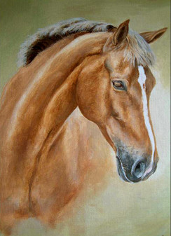 Horse portrait thoroughbred x Welsh section D
