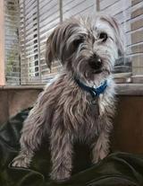 cockerpoo pastel painting dog.jpg