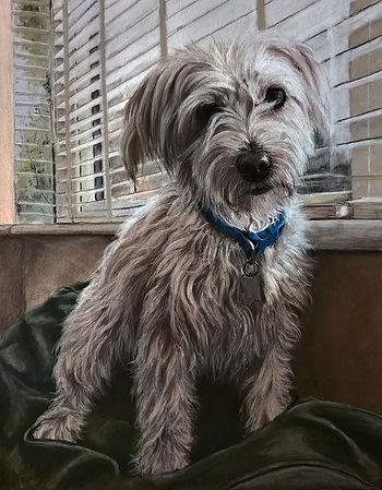 Cockerpoo dog portrait pastel painting