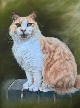Ginger cat portrait