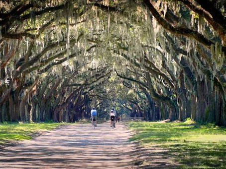 The Lowcountry and Sea Islands