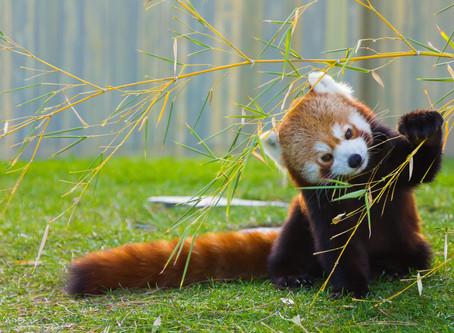 World Wildlife Day: Best Wildlife Trips